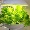 これ食べられるんだ!? お部屋で育てられる水耕栽培キット「プチベジ」